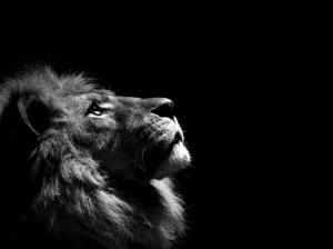 Lion-In-Night